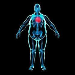 Избыточный вес препараты купить, профилактика, симптомы избыточный вес
