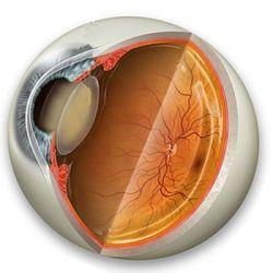 Катаракта препараты купить, профилактика, симптомы катаракты