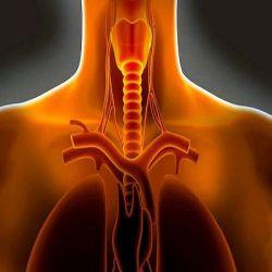 Трахеит препараты купить, профилактика, симптомы трахеита