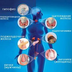 Болезни эндокринной системы препараты купить, профилактика, симптомы