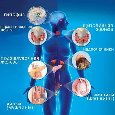 Ендокринна система