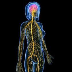 Болезни нервной системы препараты купить, профилактика, симптомы