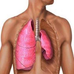Пневмосклероз препараты купить, профилактика, симптомы пневмосклероза
