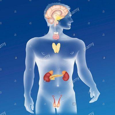 Ендокринні захворювання
