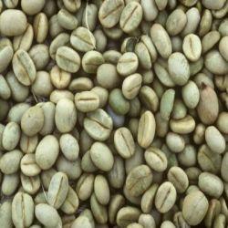 Кофе Зеленое препараты купить, цена, полезные свойства зеленого кофе