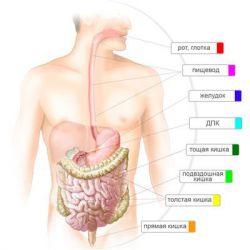 Микрофлора кишечника препараты купить, профилактика, симптомы