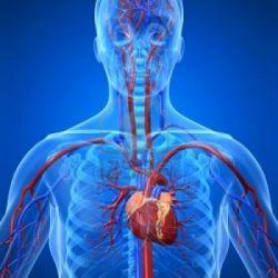 Болезни сердечно сосудистой системы препараты купить, профилактика