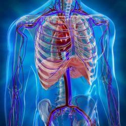 Болезни кровеносной системы препараты купить, профилактика, симптомы