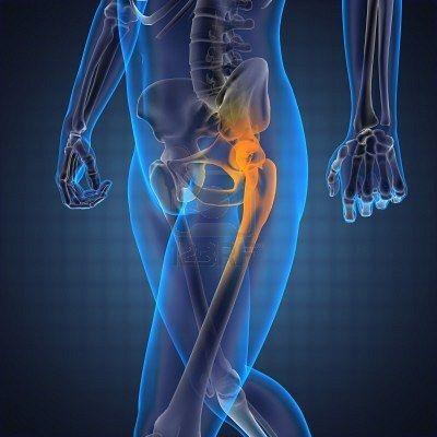 Кістково-м'язова система