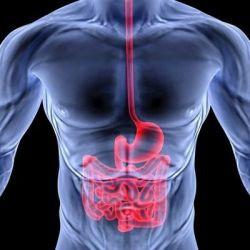 Болезни тонкого кишечника препараты купить, профилактика, симптомы
