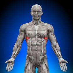 Болезни мышц препараты купить, профилактика, симптомы